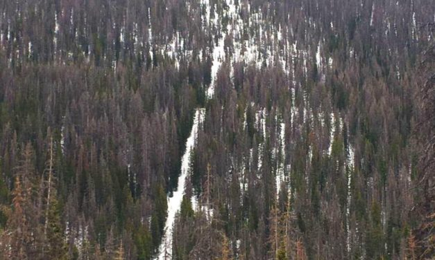Bipartisan, Bicameral Emergency Wildfire Cleanup Bill Introduced in U.S. House