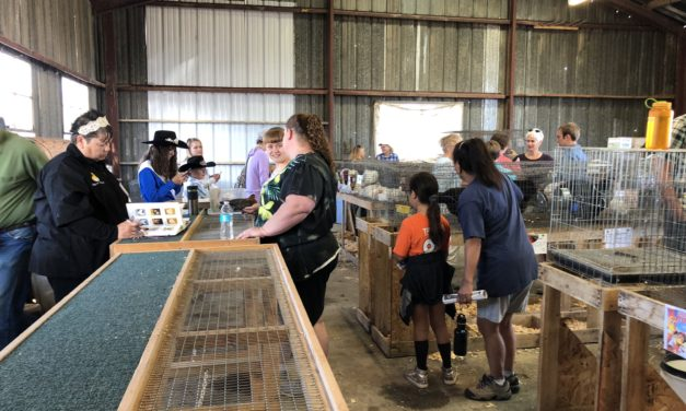 Chaffee County Fair 4-H poultry and rabbit judging commences