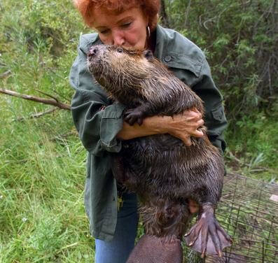 'Leave it to the Beavers' upcoming presentation from Sherri Tippie
