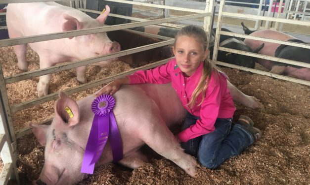 Chaffee County Fair, high-quality 4-H showing fosters 'irreplaceable memories'