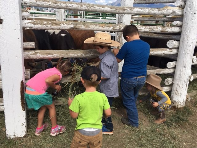 More fun at the Chaffee County Fair, muttin' bustin' and catching greased pigs
