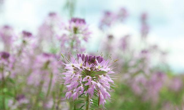 GARNA's Wildflower Identification Hike Set for July 17