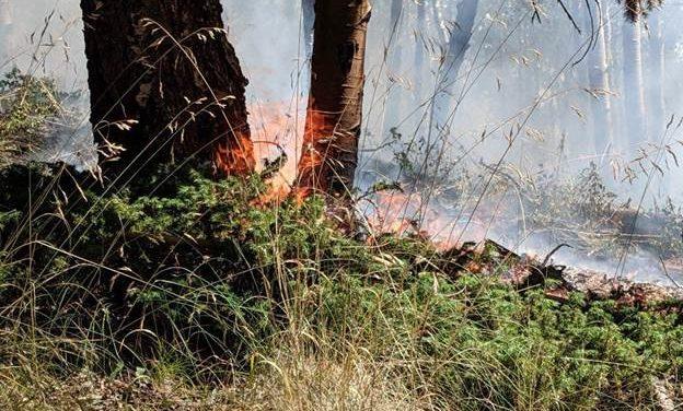 Decker Fire update: fire crosses onto San Isabel National Forest