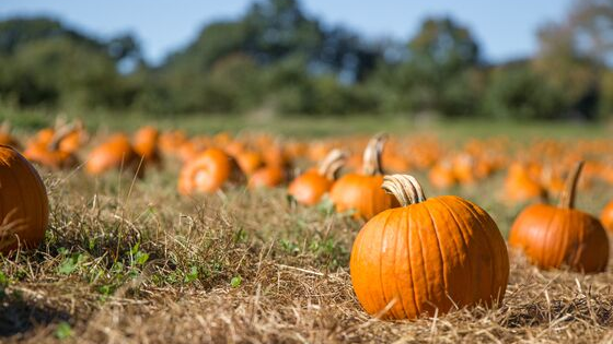 Pumpkin Patch at Hutchinson Ranch this weekend