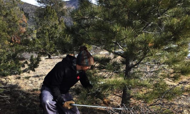 Christmas tree permits available on BLM lands in central and eastern Colorado