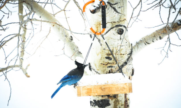 Participate in the 2021 Great Backyard Bird Count