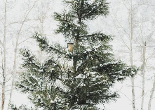 Salida Christmas Tree Disposal Site