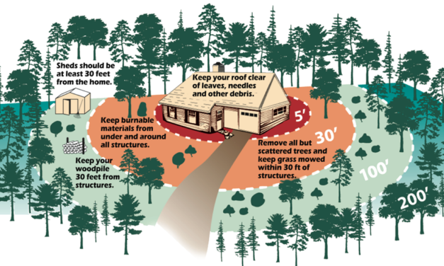 Envision Forest Health Council finalizes Chaffee County Wildfire Protection Plan Draft