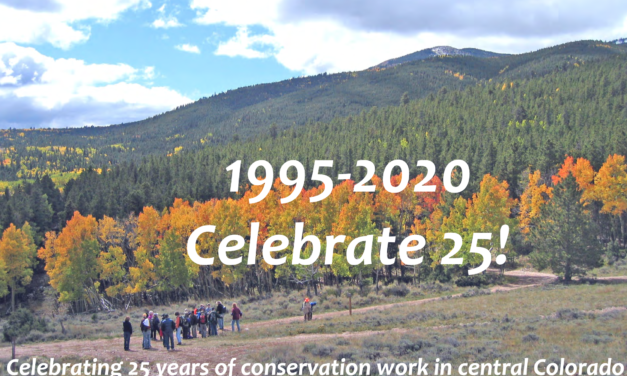 Wild Connections Still Focused on Supporting the Environment 25 Years Later
