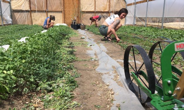 SOIL Sangre de Cristo Launches Zero-Interest Loans to Support Local Farmers and Food Producers
