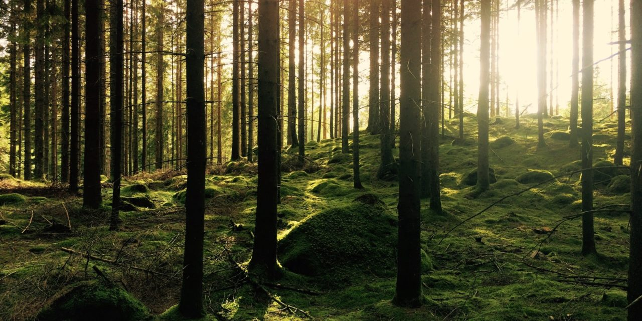 If a Tree Falls in a Forest: The sound as COVID-19 Deaths Hit 200,000