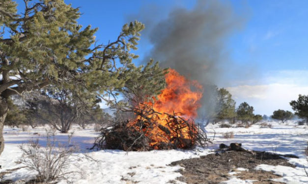 Bureau of Land Management plans pile burns in Chaffee, Custer, and Fremont counties