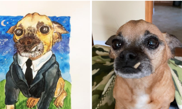 Ark-Valley Humane Society's Good Pet/Bad Pet Portrait Fundraiser Now Live