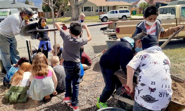Salida Tree Board Announces Street Tree Adoption Program for Residents
