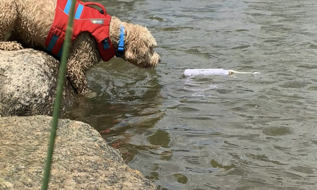 The Crazy River Dogs Were Indeed Crazy