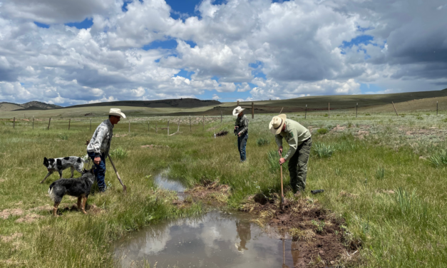 Central Colorado Conservancy Makes Progress with Badger Creek Watershed Project